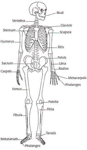 vanessa hudgens 2011  digestive system diagram worksheet